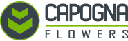 Capogna Flowers